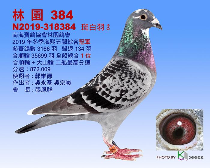 台湾冬季海翔3.5万羽五关总冠军产生