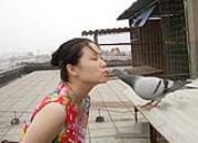 百科长知识:有趣的信鸽亲和训练(图)