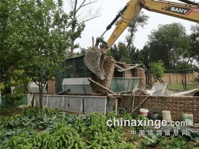 北京养鸽人:鸽棚腾退 20笼鸽子无处安放