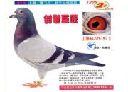 每日一鸽:三羽上海千公里当日归冠军