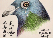 武汉的鸽子不再流泪