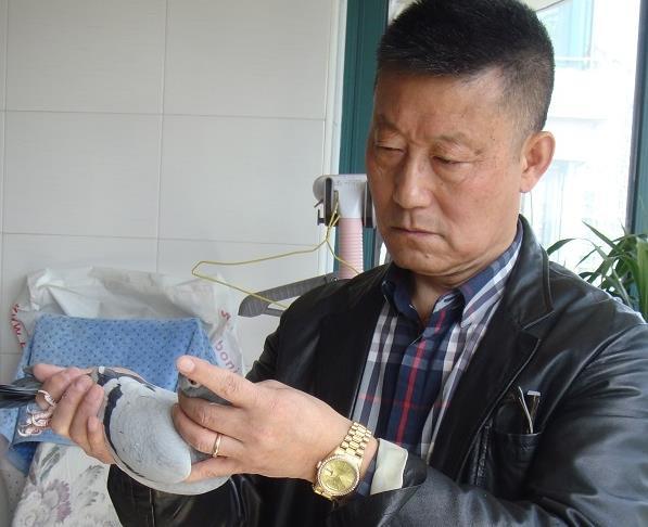 面朝上海 春暖花开:上海宏强鸽舍掌门人韦来强