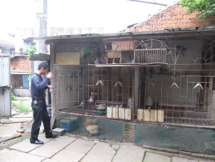 宁波老陈的养鸽故事
