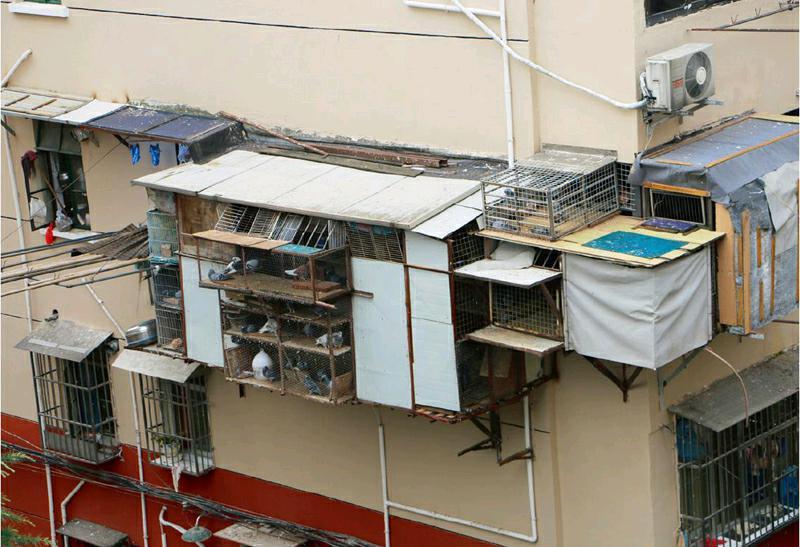 张顺奎口中的小弟 面临搬迁困扰:可能不养了