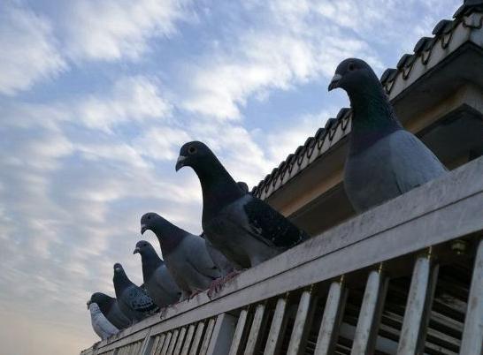 买鸽子的套路你会防范吗?