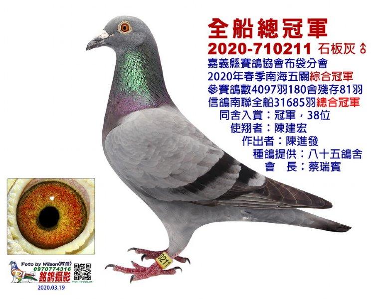 台湾南海31685羽五关鸽王冠军欣赏