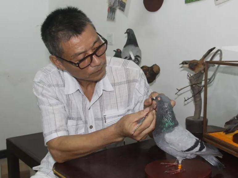 旅法华侨鸽友回故里 献绝活制
