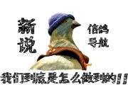 探讨:信鸽归巢的方法和差距