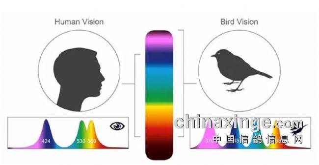 鸽眼探索:可见光和不可见光的应用