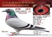 明天直播:辽宁翔冠同步拍卖 乘风破浪的冠军鸽