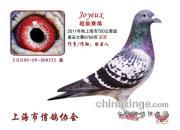 上海市泰安精英赛 多位名家入赏高位