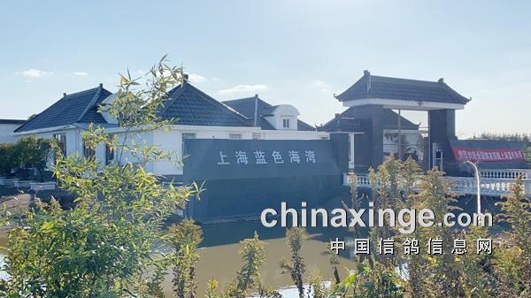 养功卓越成就赛鸽品质――上海蓝色海湾首关述评