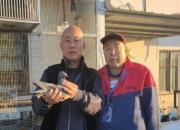 京城赛鸽黑马刘志强――黑色传奇3337