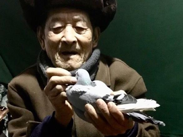 敬老院的师傅也爱鸽 不惧寒冷赏鸽鉴鸽