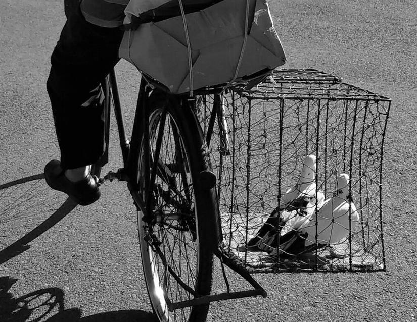 1990年代养鸽的乐趣:逛鸽市会鸽友赏鸽子