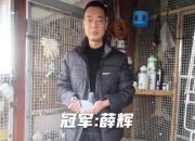 血统解析:上海市2020年幼鸽特比前三名