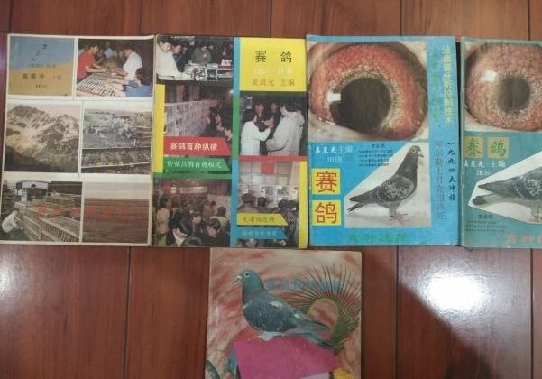 收藏老物件 各式鸽刊和训放笼