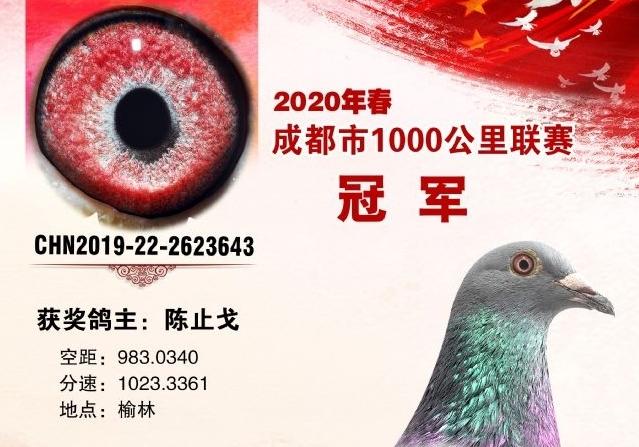公布答案!这一羽是千公里冠军的鸽眼