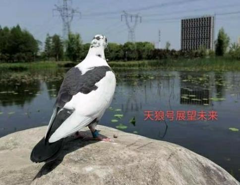 鸽道:善学习重分享尊自然