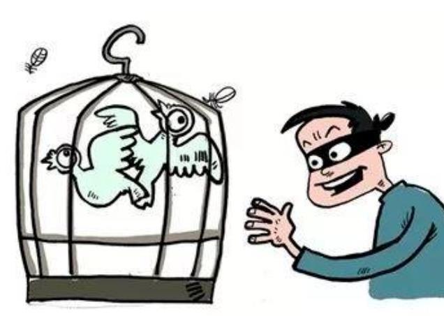 青海:25万元冠军鸽被偷 警察走访半月抓获盗贼
