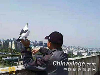 好鸽子在哪里?