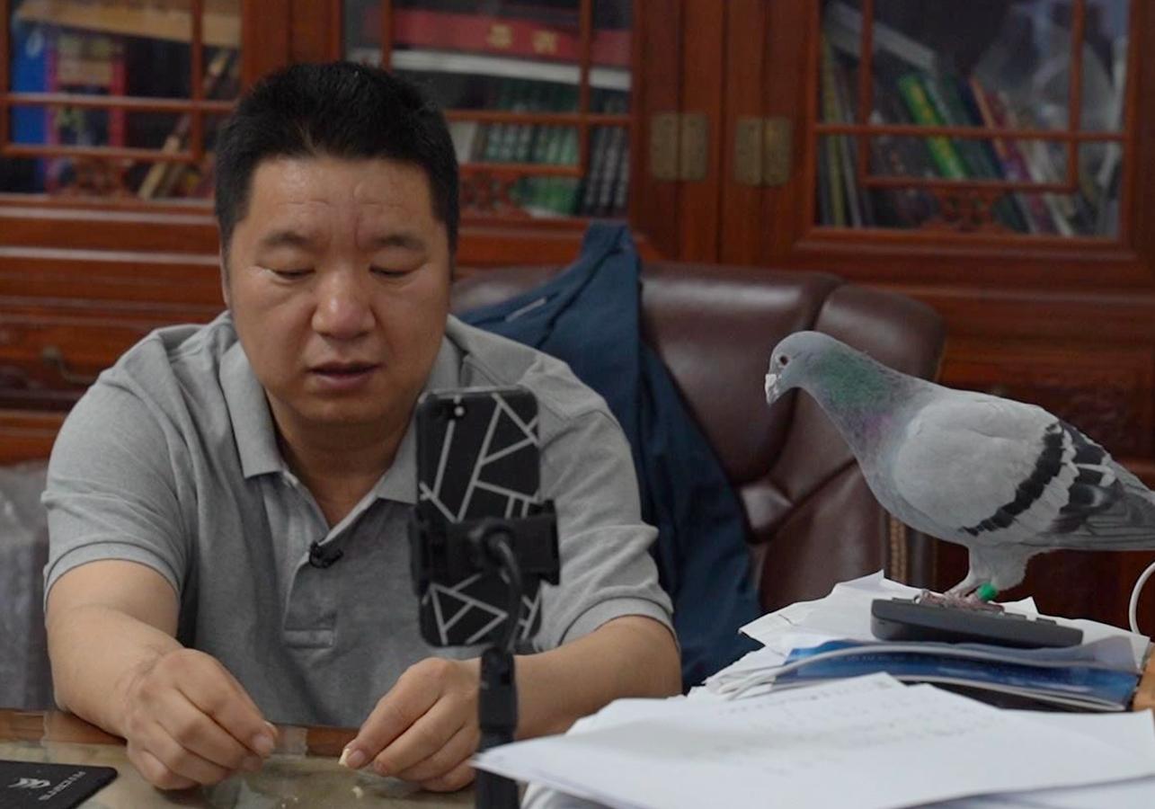 """""""老北京""""为鸽狂:每年花几百万买鸽子"""