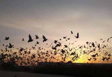 万羽竞翔 比肩巴塞 江苏千公里时间定了
