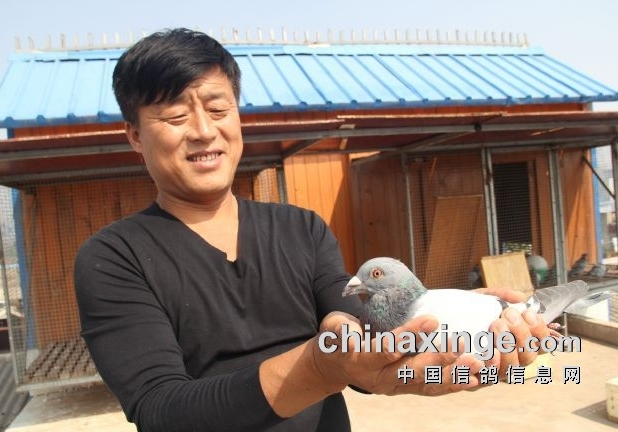 """田文革:老血统夺""""真如鹏飞""""鸽王总冠军!"""