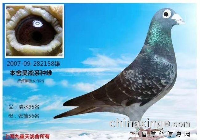 议吴淞鸽的传承与发展