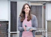 飒!24岁荷兰女鸽友斩获NPO幼鸽组最佳鸽舍冠军