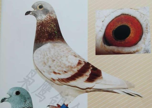老照片:海茨门西翁鸽欣赏