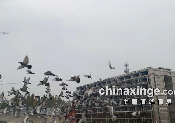 万羽竞翔! 辽宁元泰预赛冠军