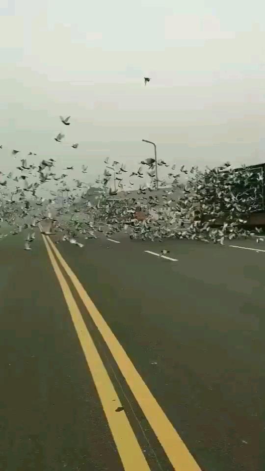 现场视频:上海市千公里放飞盛况