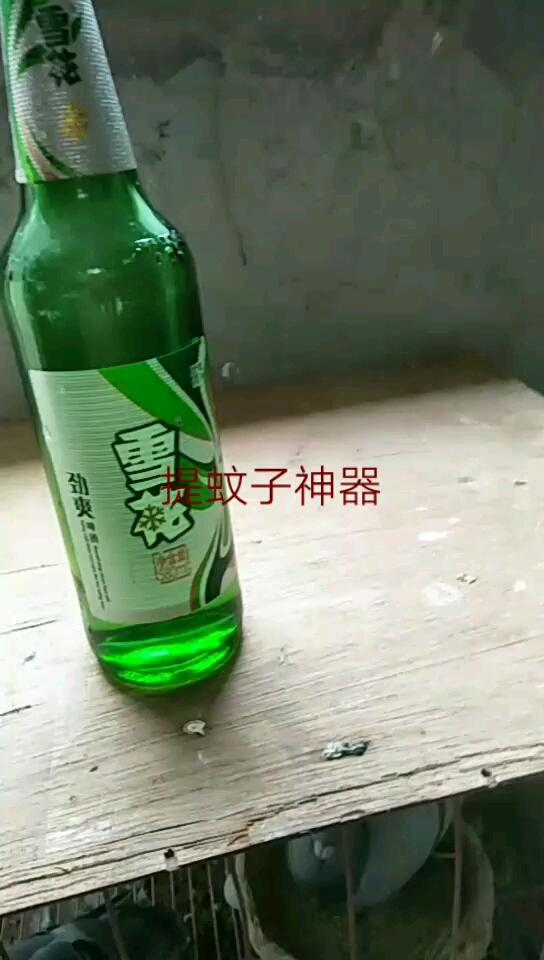 夏季鸽棚防蚊 一个啤酒瓶搞定