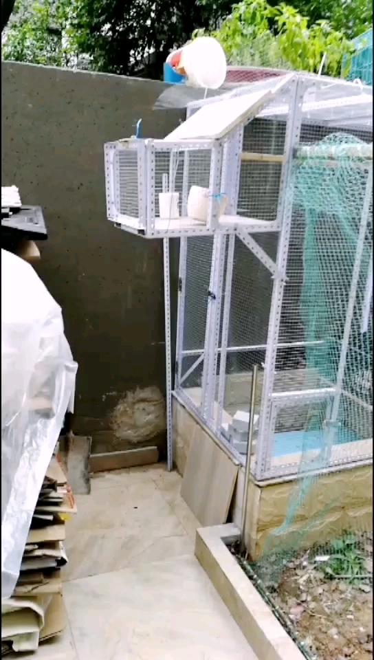 自制鱼池上鸽笼完工 鸽友们看着咋样