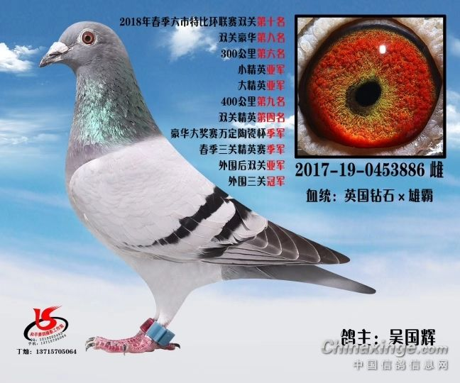 动物鸽蜗牛鸟类图示鸟鸽子648_540教学v动物是怎么一回事图片